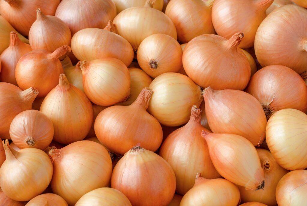 Луковицы лука картинки для